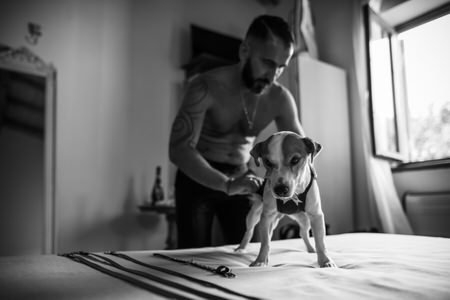 Groom prepares his little dog for the wedding ceremony